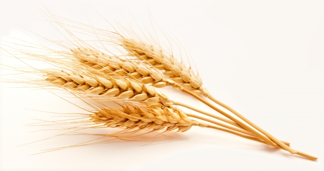 RETAIL FPI | Is Georgian Wheat Getting Stronger? - Georgia Today on