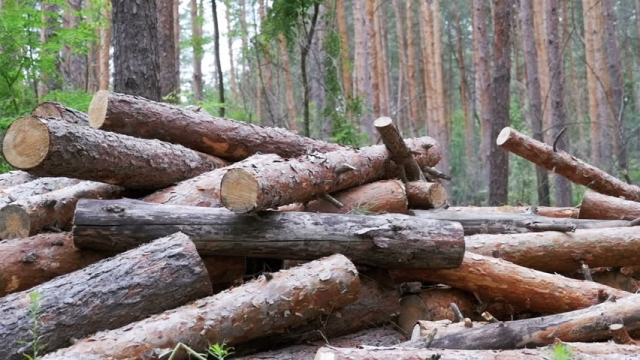 Sanctions for Illegal Tree Cutting to Be Tightened in Georgia